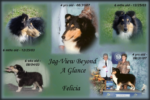 "Ch. ptd., Jag-View Beyond A Glance | ""Felicia"""