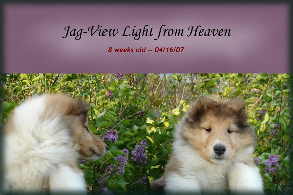 "Ch. ptd., Jag-View Light From Heaven -- ""Kyra"""