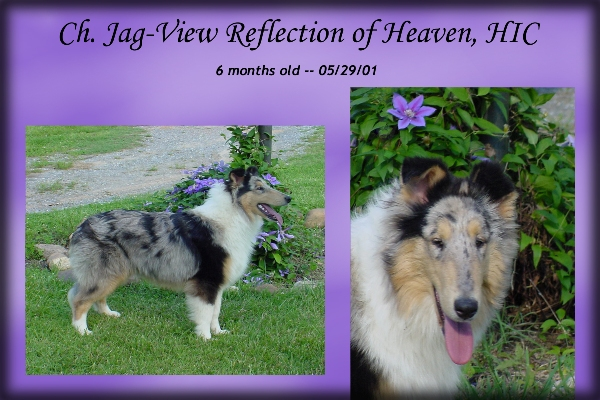 "Ch. Jag-View Reflection of Heaven, HIC -- ""Lanie"""