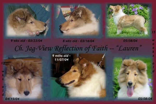 "Ch. Jag-View Reflection of Faith | ""Lauren"""